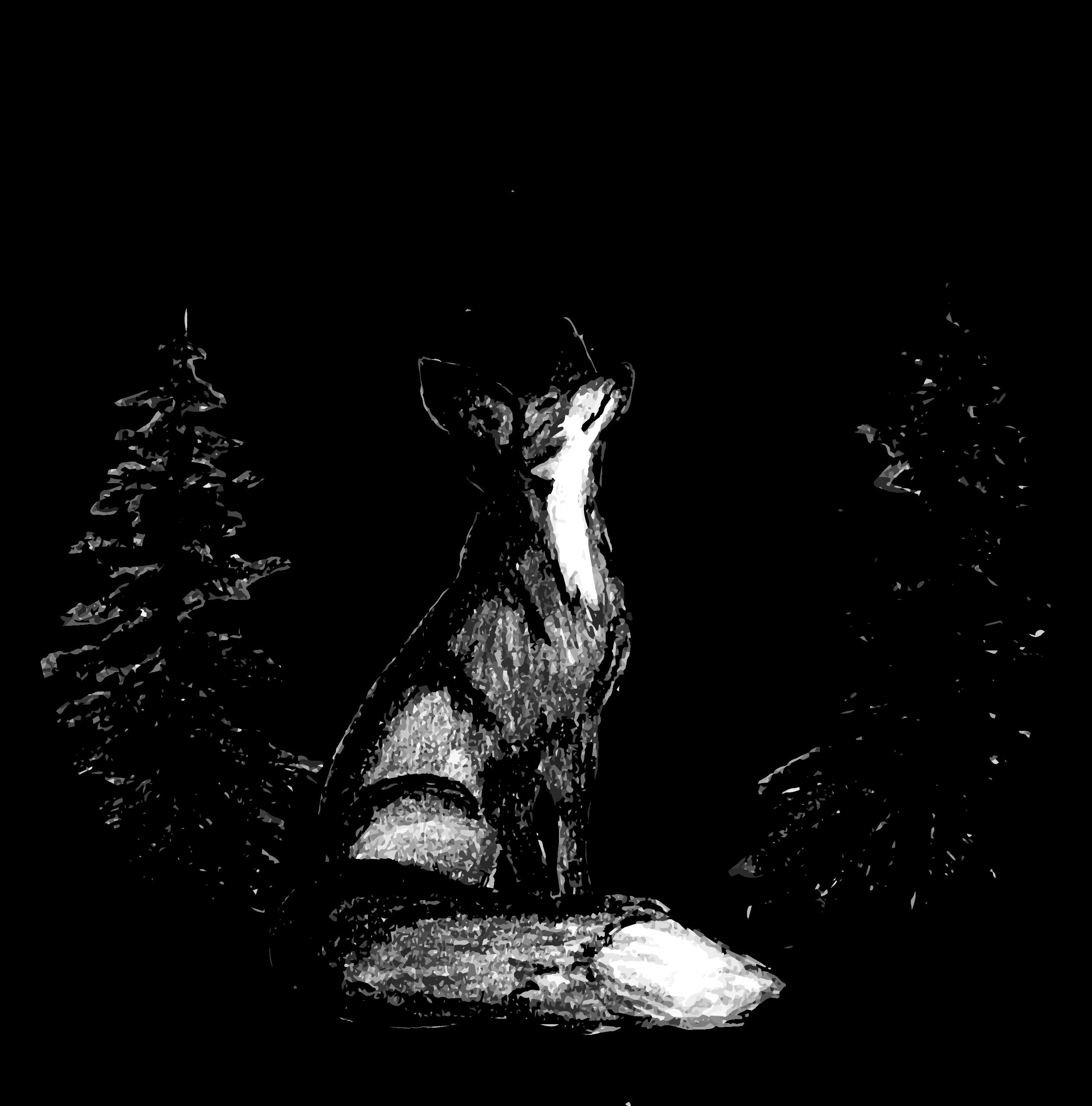 Dark Fox Creative